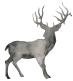 Skye-Deer-White
